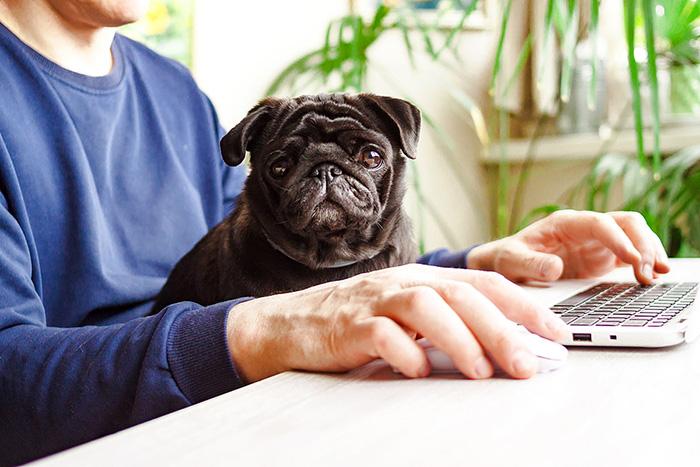 senior citizens, elderly, pet food, vet care